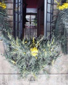 タオルミーナ 枝の主日